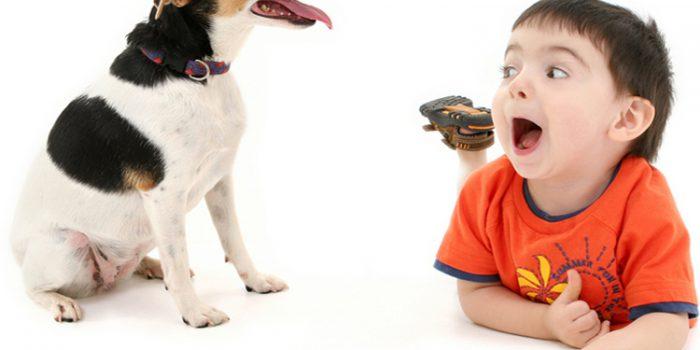 ¿Es mejor adoptar perros jóvenes o adultos?