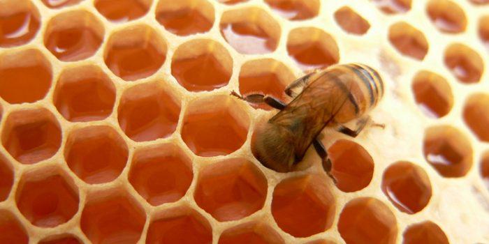 ¿Cuáles son las propiedades de la miel y qué nos aporta?