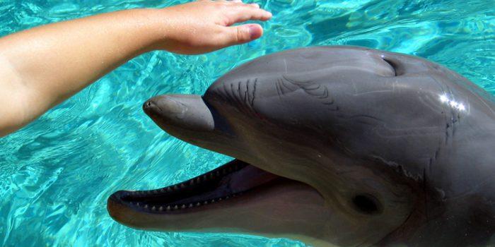 Beneficios y funcionamiento de la terapia con delfines