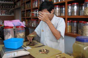 El Hongo Cordyceps sinensis o Tochukaso