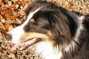 Causas de la fobia a los perros