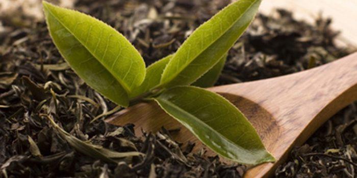 ¿Cuál es la mejor manera de conservar el té?