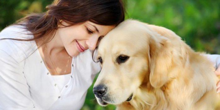 Animal communicator o comunicación entre especies