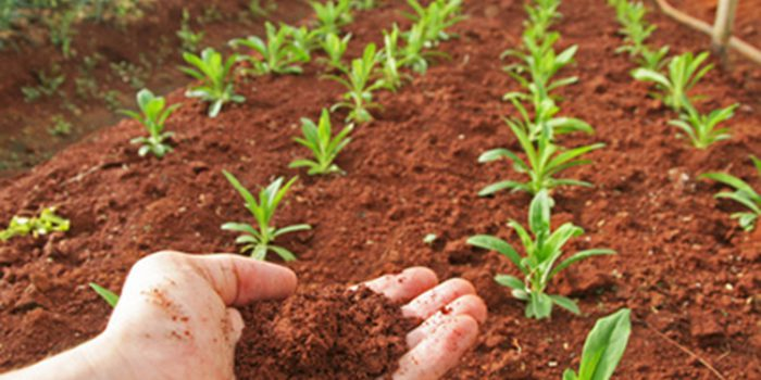 Productos fitosanitarios naturales, ¿eliminan las plagas?