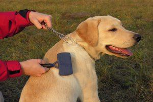 Aceite de jojoba para mascotas