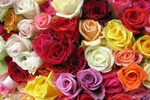 Esencias de Rosas, indicaciones generales