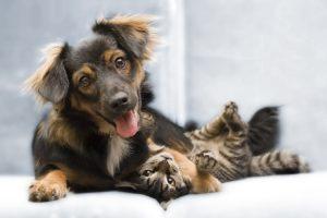 Cómo ahorrar en los productos y cuidados de tu mascota
