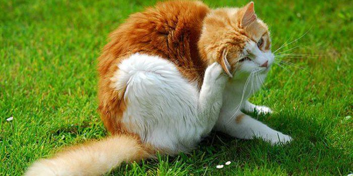Como desparasitar gatos con remedios naturales