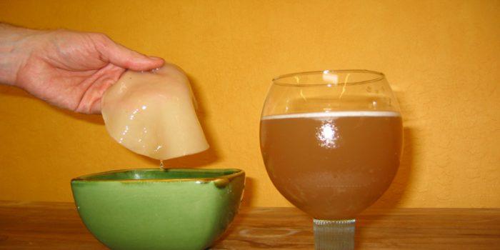 Consejos para la preparación del té Kombucha