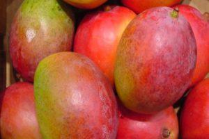 mango-africano