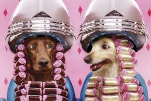 perros-en-peluqueria