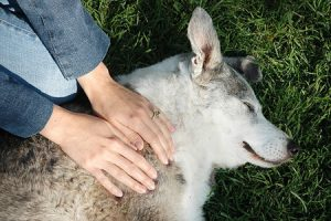 Beneficios del Reiki para los animales