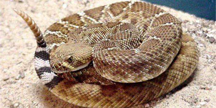 La Serpiente, símbolo de sabiduría y salud
