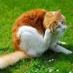 Como desparasitar gatos