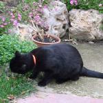 ¿Por qué comen hierba nuestras mascotas?
