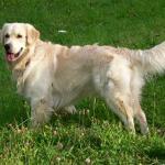 Perros para Epilepsia