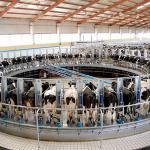 Explotación de vacas lecheras