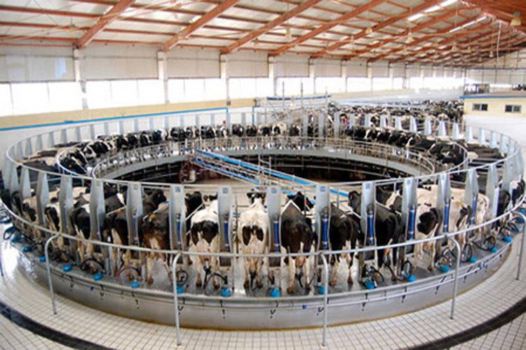 granja-vacas-lecheras