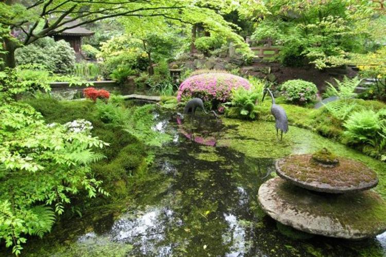 Armonizar el jard n seg n el feng shui - Plantas para estanques de jardin ...
