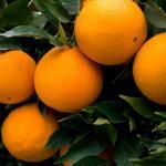 La Naranja Dulce
