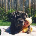 Perros y el nacimiento del bebé