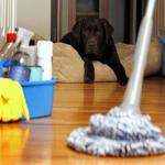 Productos de limpieza ecológicos para profesionales