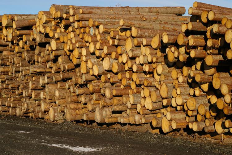Madera sostenible - Fotos de bungalows de madera ...