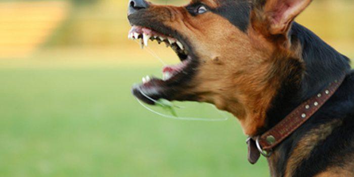 Causas de agresividad en perros, como solucionarlas