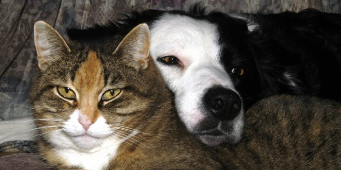 ¿Qué causa la aparición de otitis en perros y gatos?