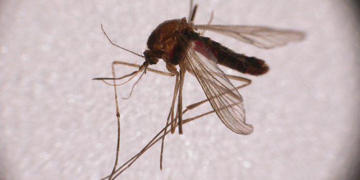 Remedios para las picaduras de insectos