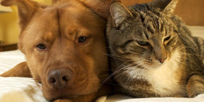 Ventajas de la adopción de perros y gatos