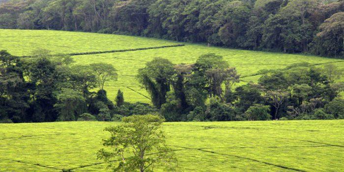 La Revolución Verde: Billetes verdes que nos han dejado con menos