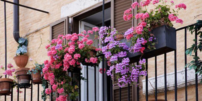 Beneficios de las plantas ornamentales para la salud for 6 plantas ornamentales