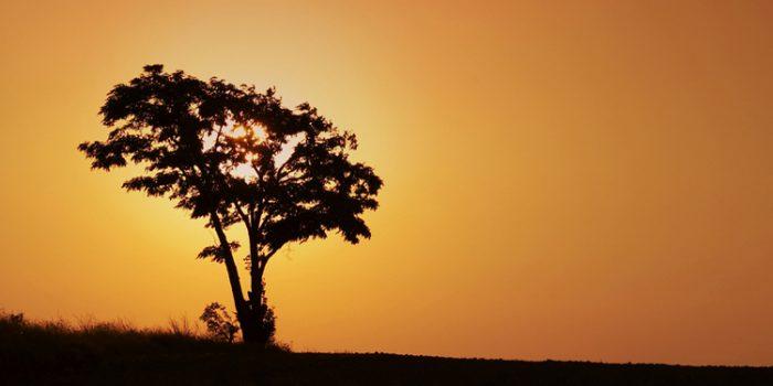 Aplicaciones del árbol del Té, Tea Tree: el curalotodo