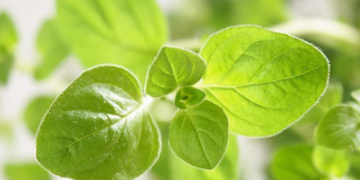 Verduras silvestres comestibles: consejos para recolectarlas