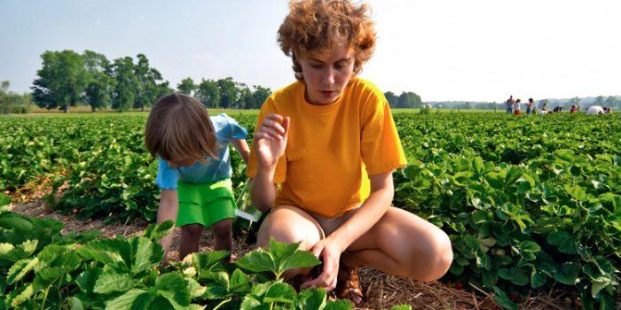 Ventajas de la agricultura biológica