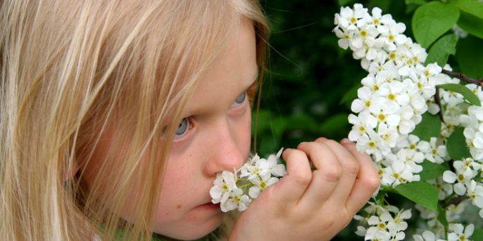 Fiebre del heno o rinitis alérgica , terapias naturales