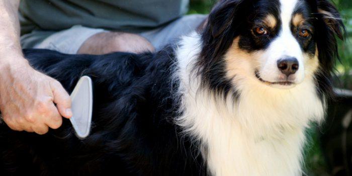 Causas de la aparición de la caspa en las mascotas