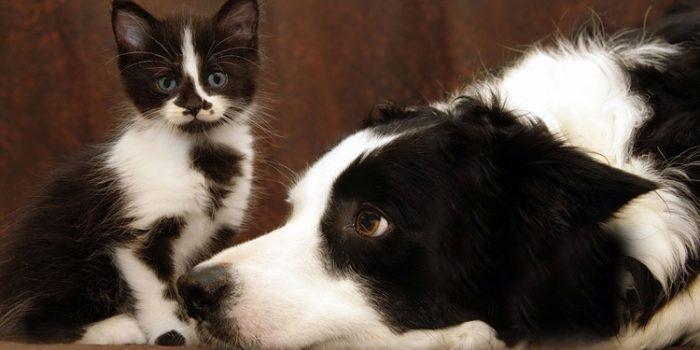 Elegir una mascota: una gran responsabilidad