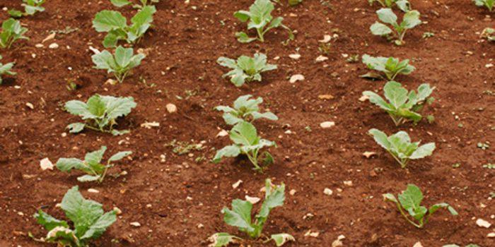 Ventajas de la rotación de cultivos