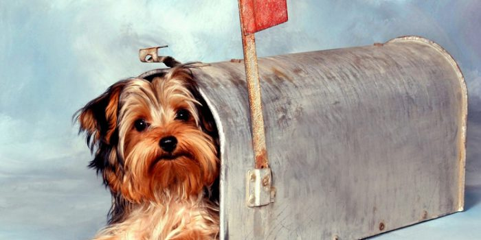 Reflexión sobre el maltrato de los animales