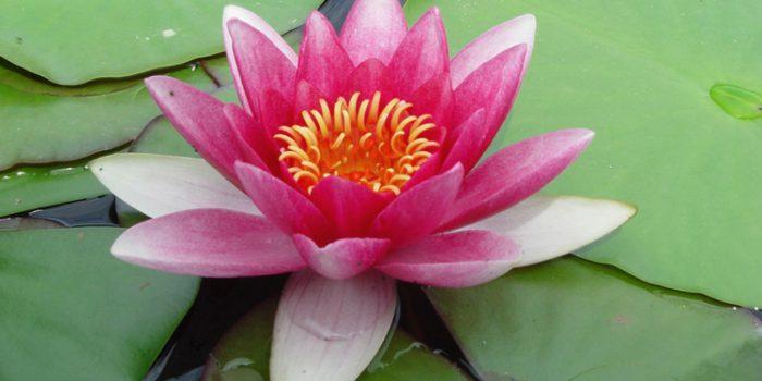 Esencias florales para adelgazar ¿funcionan?