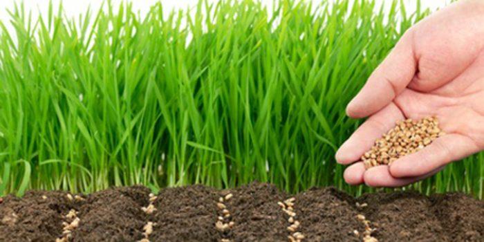 Herbicidas naturales, alternativas eficaces