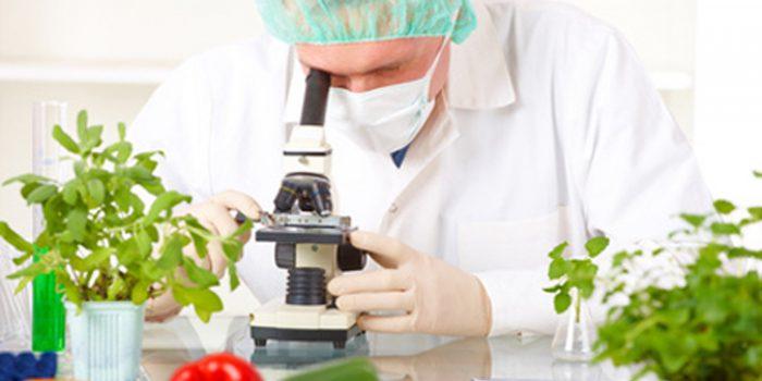 Consejos para evitar el contagio de la bacteria E coli
