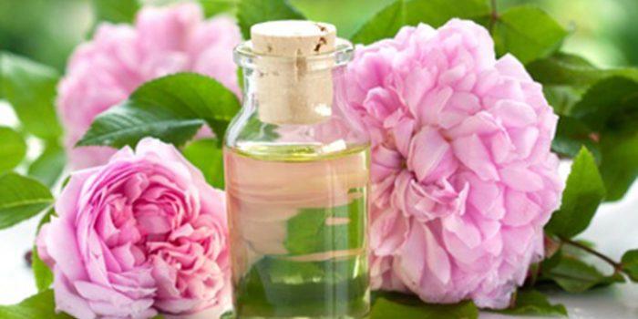 Usos y propiedades de la rosa Damascena o de Bulgaria