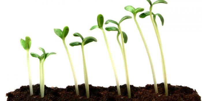 Semillas utilizadas en la germinación