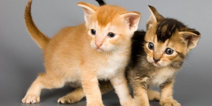 Algunas curiosidades sobre gatos