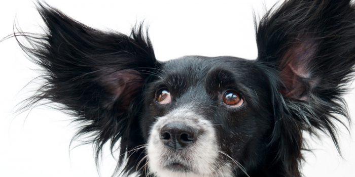 Relación del maltrato animal con el maltrato hacia las personas
