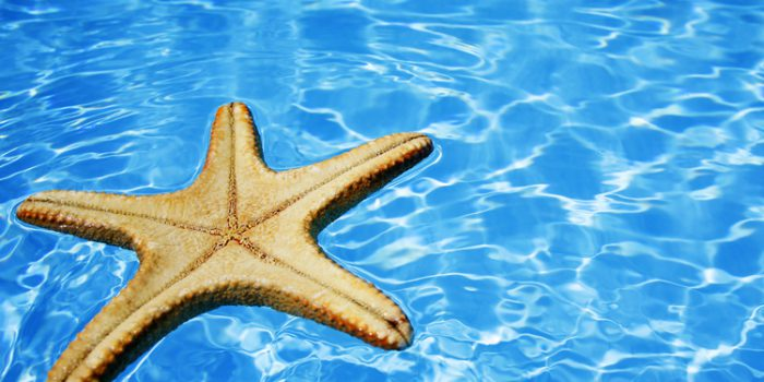 Beneficios generales de los tratamientos con algas