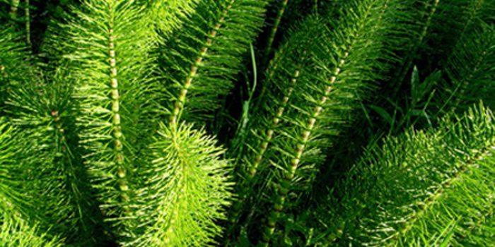 Beneficios del Silicio orgánico y propiedades